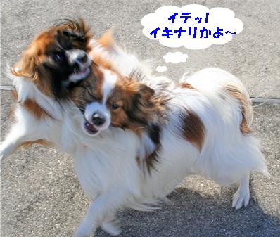 yuzukota061224-1.jpg