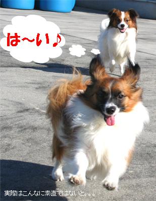 yuzukota061224-10.jpg