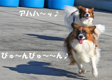 yuzukota061224-3.jpg