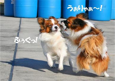 yuzukota061224-6.jpg