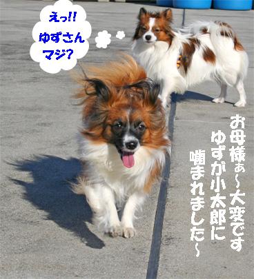 yuzukota061224-7.jpg