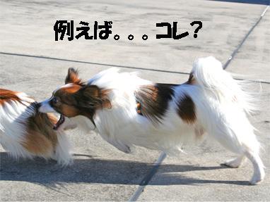 yuzukota061224-8.jpg