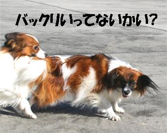 yuzukota061224-9.jpg