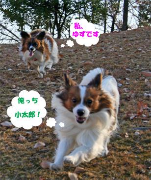 yuzukota061226-1.jpg