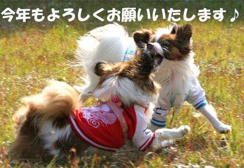 yuzukota070101-2.jpg