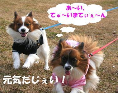 yuzukota070106-1.jpg