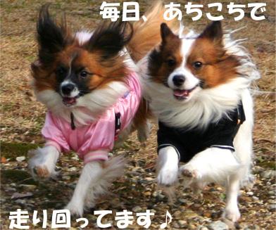 yuzukota070106-2.jpg