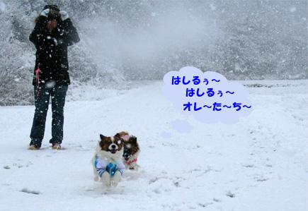 yuzukota070107-1.jpg
