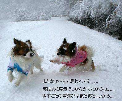 yuzukota070108-1.jpg
