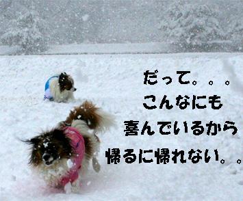 yuzukota070108-2.jpg