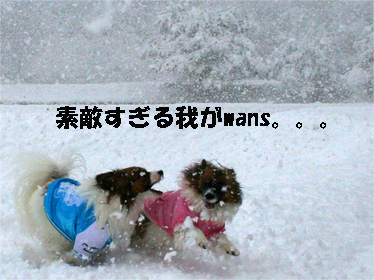 yuzukota070108-3.jpg