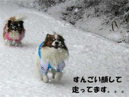 yuzukota070108-4.jpg
