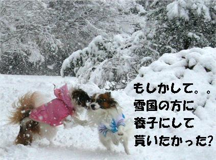 yuzukota070108-5.jpg