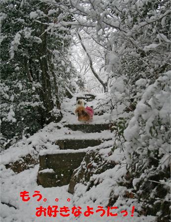 yuzukota070108-7.jpg