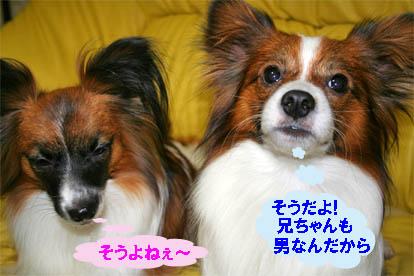 yuzukota070122-1.jpg