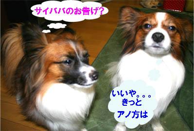 yuzukota070123-1.jpg