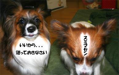 yuzukota070124-1.jpg