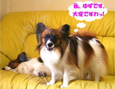yuzukota070131-1.jpg