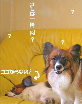 yuzukota070131-2.jpg