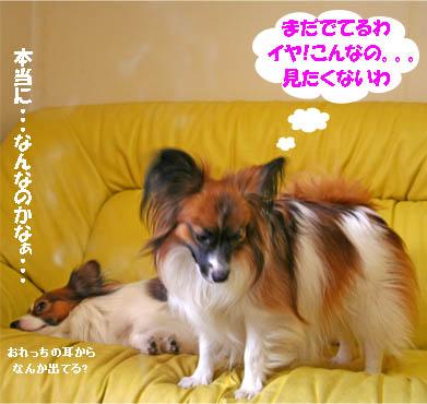 yuzukota070131-3.jpg