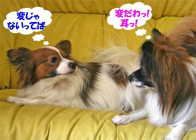 yuzukota070131-4.jpg
