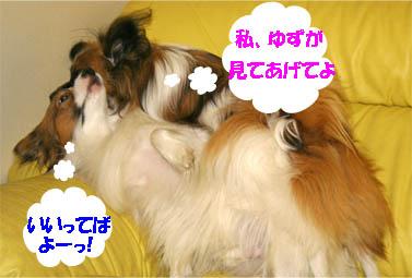 yuzukota070131-5.jpg