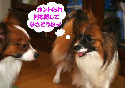 yuzukota070131-6.jpg
