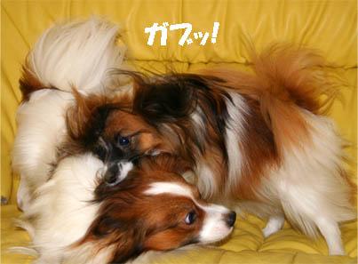 yuzukota070131-7.jpg