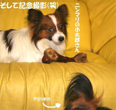 yuzukota070201-2.jpg