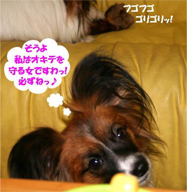 yuzukota070201-3.jpg