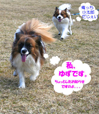 yuzukota070213-1.jpg