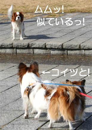 yuzukota070213-2.jpg