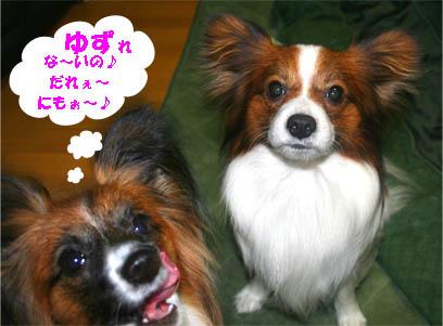 yuzukota070216-1.jpg