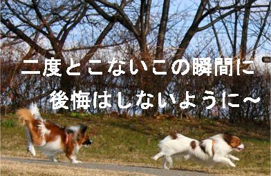 yuzukota070216-2.jpg