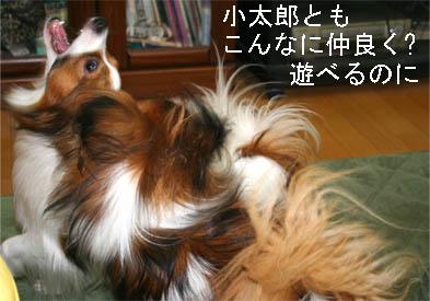 yuzukota070222-1.jpg