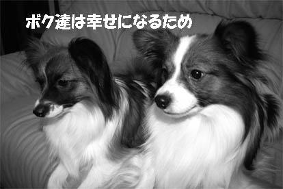 yuzukota070227-1.jpg