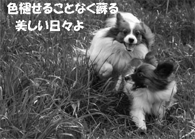 yuzukota070227-2.jpg