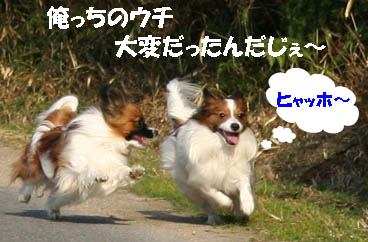 yuzukota070305-1.jpg