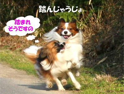 yuzukota070305-2.jpg