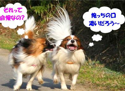 yuzukota070305-4.jpg