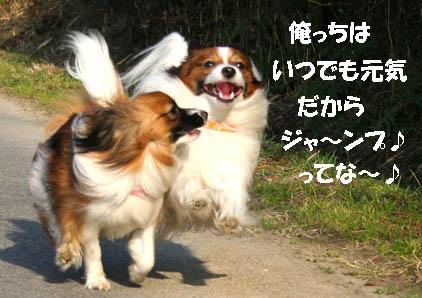 yuzukota070305-5.jpg