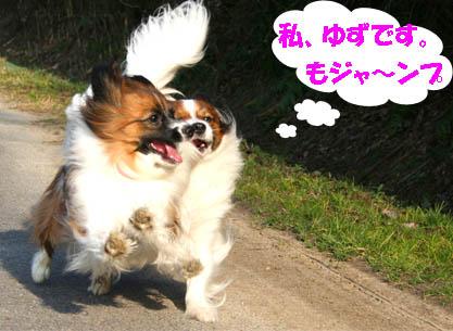 yuzukota070305-6.jpg