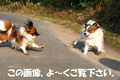 yuzukota070306-2.jpg