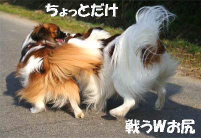 yuzukota070307-3.jpg