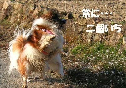 yuzukota070307-6.jpg