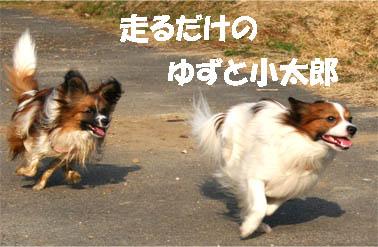 yuzukota070308-1.jpg
