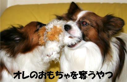 yuzukota070309-1.jpg