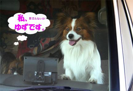 yuzukota070312-1.jpg