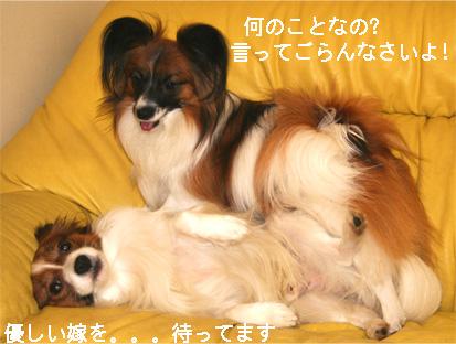 yuzukota070316-1.jpg