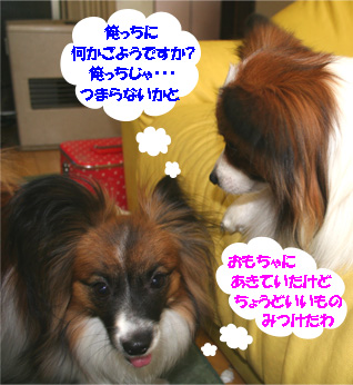 yuzukota070329-1.jpg